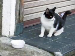 201201_cat.jpg