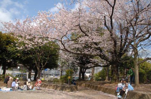 201403_hanami_00.jpg
