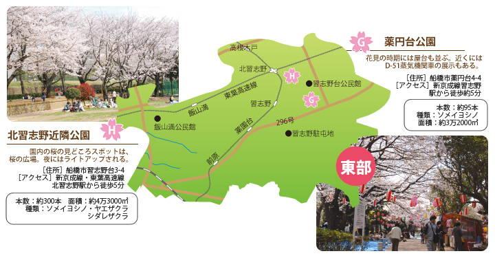 201403_hanami_03.jpg