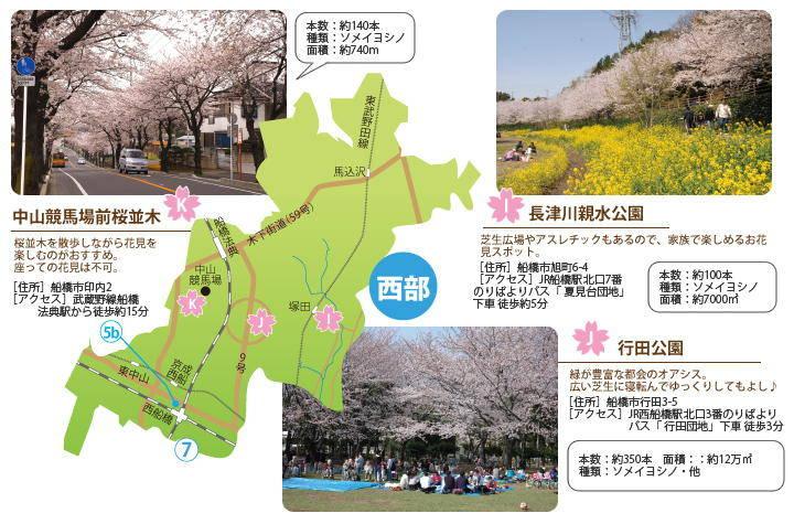 201403_hanami_04.jpg