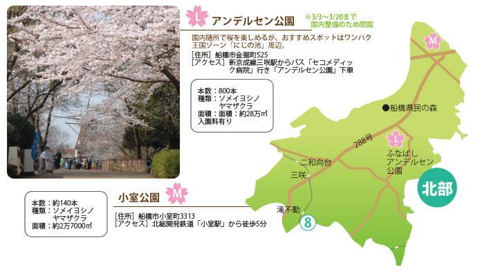 201403_hanami_05.jpg