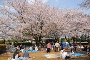 201503_sakuraichigo02.jpg