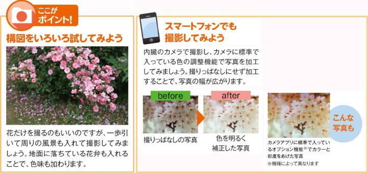 201603_sakura_02e.jpg