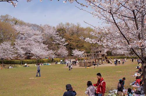 201603_sakura_02h.jpg