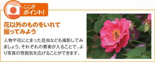 201603_sakura_02k.jpg