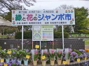 hanato001.JPG