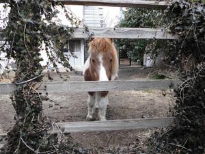 pony02.jpg