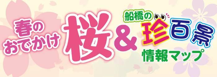201703_sakurachin_logo