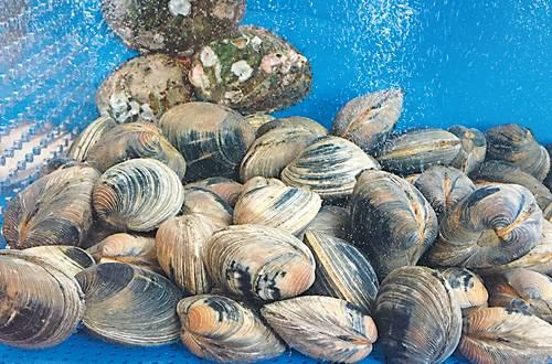 201704_shellfish_13a